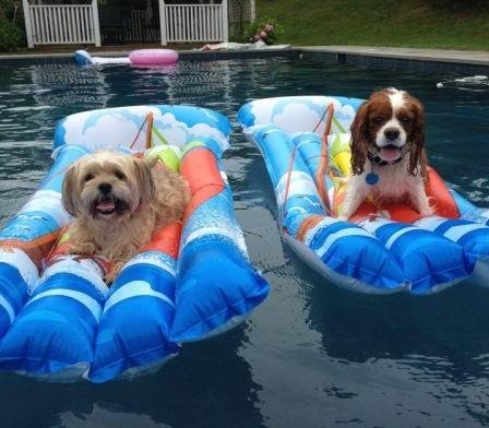Perros en verano encima de la colchoneta